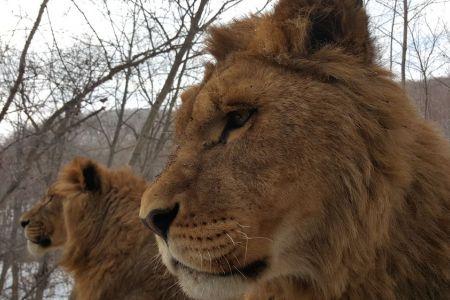 lev-safari-park-2.jpg