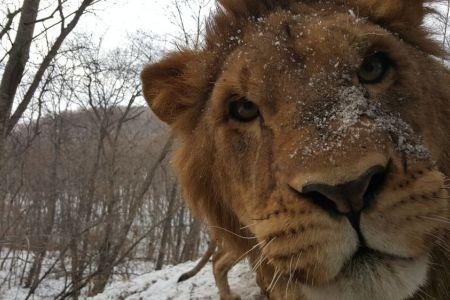 lev_safari_park_1.jpg